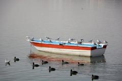 MM-SALON-CM-Boats_Fedai_Coskun_Birds_and_Boat_Turkey