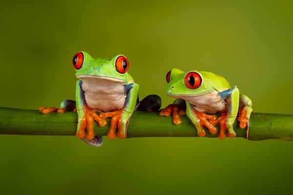 Nature_Chris_Gledhill_Hanging-out_UK