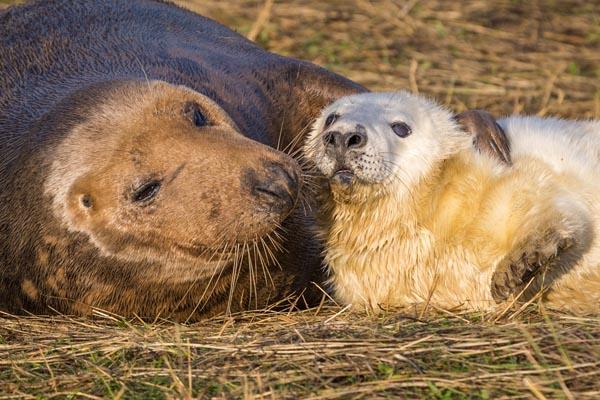 Nature_Chris_Gledhill_Proud-mum_UK
