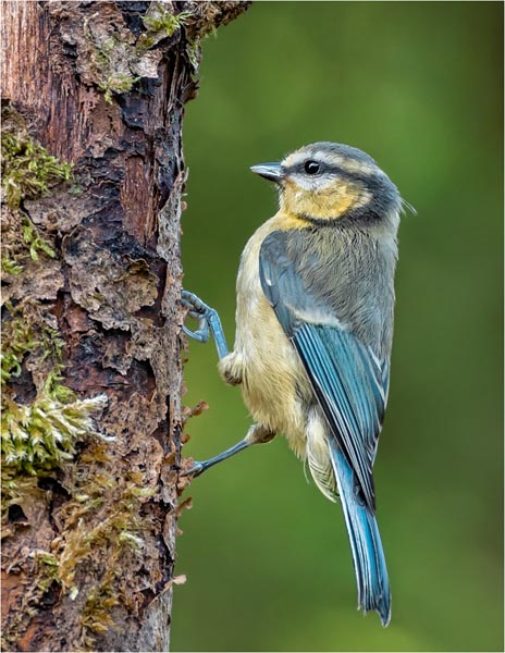 Bird Photography at Hanging Wood Forest Farm - Kitsch studios, located on the North Downs in Surrey