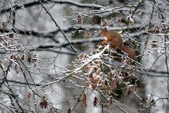 Nature_Rob_Houman_Repas-d-hiver-II_Belgium
