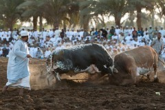 Photo-Travel_Sanjoy_-Sengupta_Suwaiq-bullfight-11_India